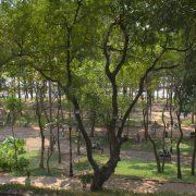 bosque urbano