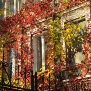 otoño y sostenibilidad